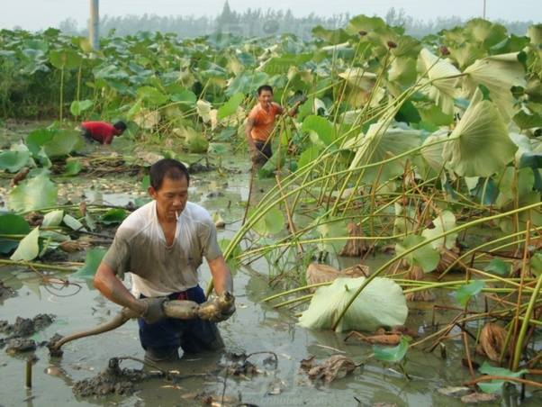 Làm sao mà Trung Quốc có đủ lương thực để có thể nuôi 1 tỷ dân của họ